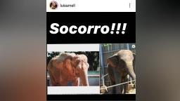 Ativista quer elefanta do zoo de Ribeirão Preto em Santuário