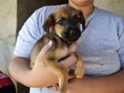 Associação de animais está com dívida de R$ 17 mil e pede ajuda