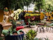 Expoflora começa amanhã em Holambra; veja atrações