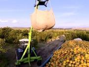 Experiência e tecnologia de SP ajudam outras regiões a produzir a laranja