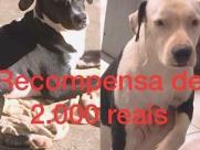 Família paga R$ 2 mil de recompensa por cachorros perdidos