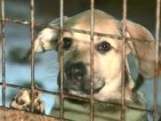 Parque Infantil recebe Feirinha de Adoção de Animais