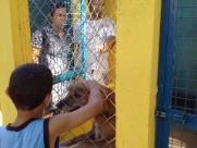 Sábado (17) é dia de Feira de Adoção de animais