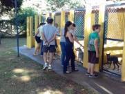 Araraquara realiza feirinha de adoção de animais neste sábado (16)
