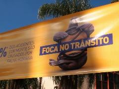 Foca no Trânsito em São Carlos - Foto: Divulgação