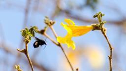 Exposição no MIS traz beleza da fauna e da flora