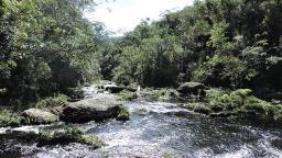 UFSCar e Fundação Florestal assinam protocolo para conservação ambiental