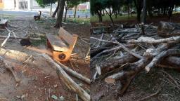 Galhos são deixados em praça após corte de árvores em Ribeirão