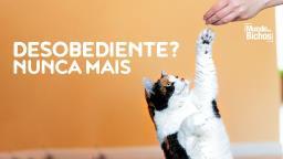 Adestrar o seu gato é possível! Essas dicas são infalíveis