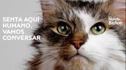 Seu gato está tentando se comunicar com você?