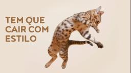 Gatos sempre caem em pé?