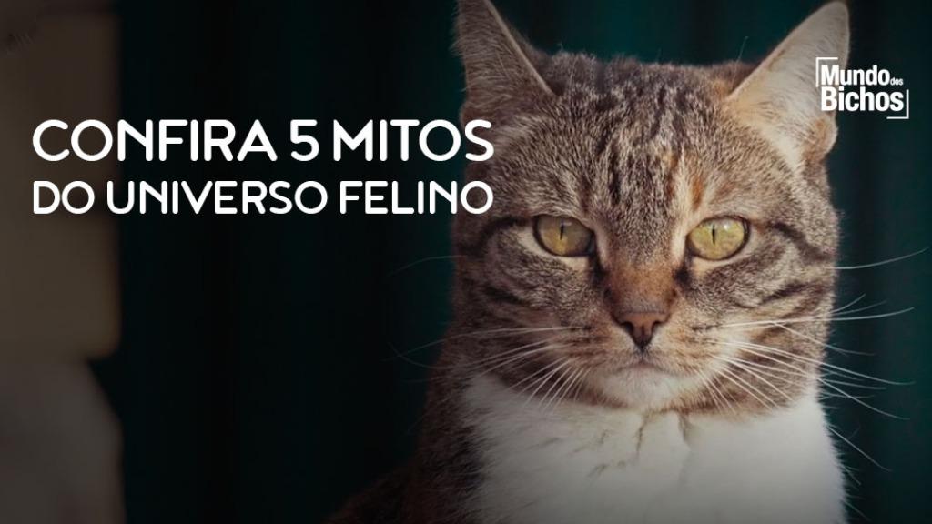 Dia do Gato - Foto: Mundos dos Bichos