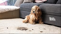 Seu cachorro come terra? Descubra o motivo