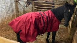 Cavalos com roupas de frio chamam a atenção em Araraquara