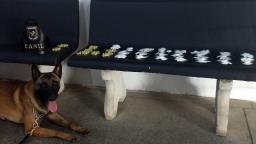 Guarda Municipal de Campinas apreende drogas no Jardim Roseira