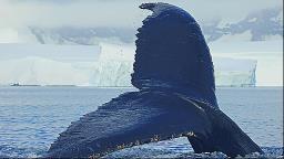 Hilda Hilst Enfrenta Moby Dick