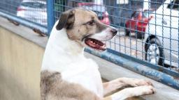 Holambra promove feira de adoção de animais neste sábado
