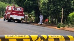 Homem morre após ser picado por abelha em Araraquara