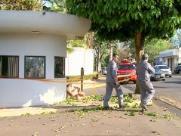Homem morre após levar choque enquanto podava árvore em Ribeirão