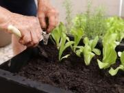 Shopping promove horta comunitária para integrar a população
