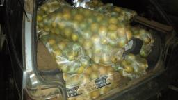 Dupla é presa furtando 10 sacos de laranjas de fazenda em Ibaté