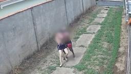 Homem é preso acusado de agarrar mulher em cidade da região