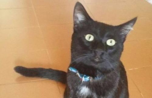Arquivo pessoal - Gato José Manuel está desparecido em Ribeirão Preto (foto: Arquivo pessoal)