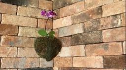 Kokedama: arranjo com orquídea em formato de coração
