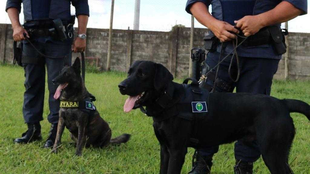 Cadelas da Guarda Municipal. Foto: Prefeitura de São Carlos - Foto: Divulgação