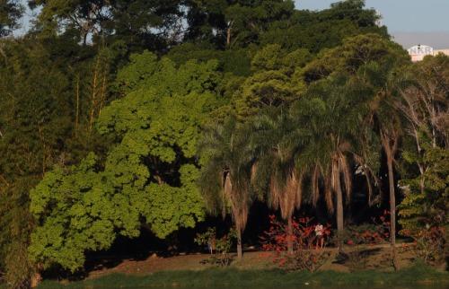 Foto: Divulgação - Lagoa do Taquaral. Foto: Divulgação