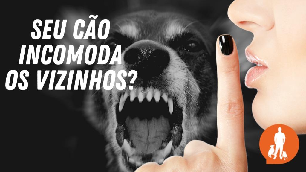 Os cães precisam latir para se comunicar. Entenda o que significa cada tipo de latido e o que fazer se seu cão late demais - Foto: ACidade ON