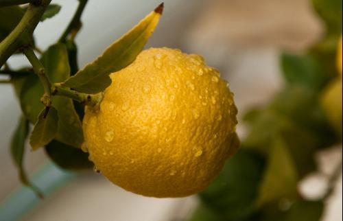Reprodução / Pixabay - Limão