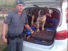 Maconha foi apreendida pela Policia Militar nesta quinta-feira (21) - Foto: Divulgação / Polícia Militar