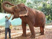 Santuário tem interesse em levar a elefanta Maison