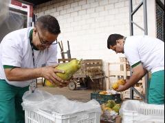 Material é selecionado pelo projeto Mesa Brasil e distribuído (Foto: Daniel Silva) - Foto: Da reportagem