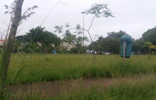 ACidade ON - São Carlos - mato alto