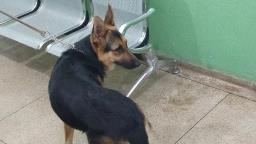 Homem que agrediu cadela em Ribeirão é solto pela Justiça