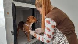 Cães confinados em caixa são resgatados com escolta da PM