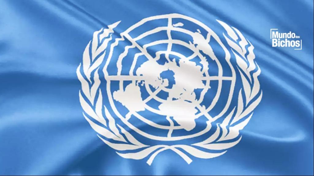 reunião da onu sobre dia mundial do meio ambiente - Foto: Mundos dos Bichos