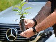 Floresta Mercedes-Benz