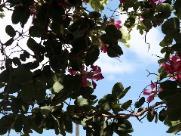 Quarta-feira (26) será predominantemente de sol em Ribeirão Preto