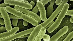 Monitoramento de vírus, fungos e bactérias poderá evitar novas pandemias
