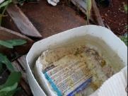 Quitandinha recebe equipes de nebulização contra dengue