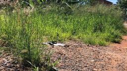 Moradores reclamam do mato alto as margens da linha férrea