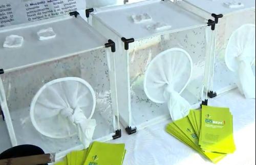 Reprodução EPTV - Mosquitos geneticamente modificados foram liberados na manhã desta quarta. Foto: Reprodução EPTV