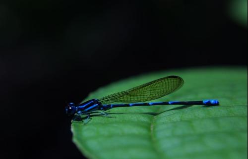 Exposição fotográfica no CDCC mostra insetos de florestas brasileiras - Foto: Divulgação