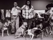 Animais abandonados é tema de exposição no Shopping Jaraguá