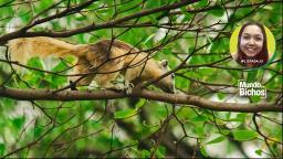 O incrível mundo dos esquilos