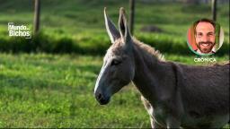 Será que precisa chamar burro de burro?