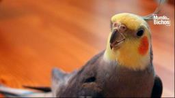 Saiba quais são as principais causas de emergência para aves pet